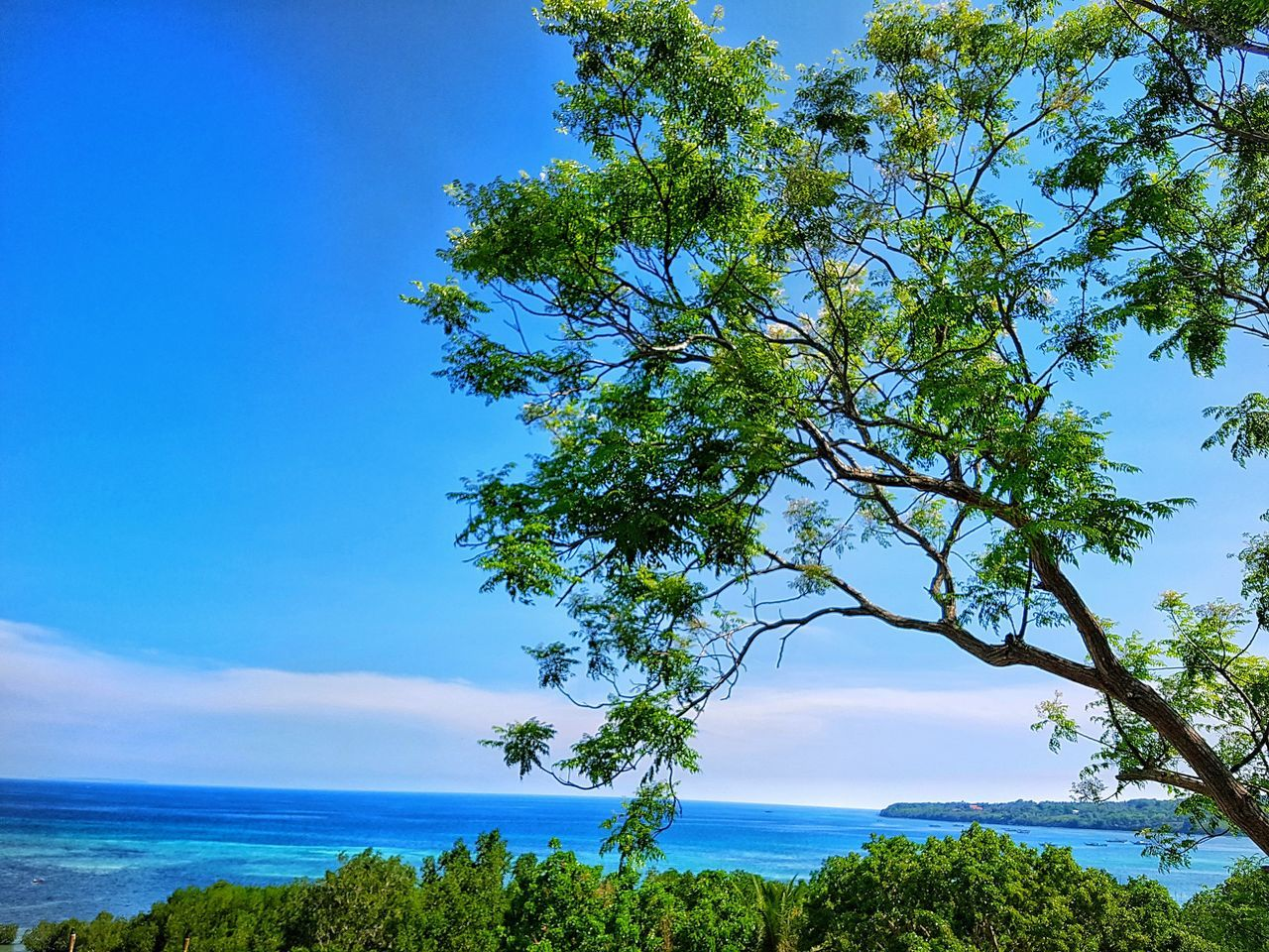 Seaduction Nature Tree Sea Blue Scenics Water Outdoors Beauty In Nature Sky Tranquil Scene Green Color EyeEm Nature Lover EyeEm Best Shots EyeEmNewHere Nature Photography Beauty In Nature Bohol Philippines