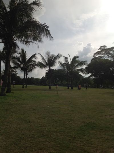 Beauty In Nature Cloud Cloud - Sky Day Field Grass Green Green Color Growth Landscape Mountain Nature Non-urban Scene Outdoors Palm Tree Park - Man Made Space Remote Scenics Sky Tourism Tranquil Scene Tranquility Travel Destinations Tree Vacations