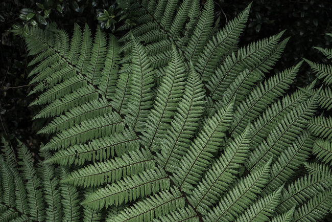 New Zealand - Wellington - Nils Nowacki - 2016 New Zealand Backgrounds Beauty In Nature Botany Close Fern Green Green Color Green Color Growing Leaf Lush Foliage Nature Nils Nowacki No People Outdoors Plant Plant Thiscouldbenewzealand Tree Wellington