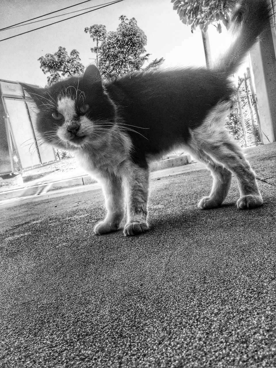 domestic cat, pets, domestic animals, feline, cat, animal themes, one animal, mammal, whisker, no people, day, outdoors, portrait