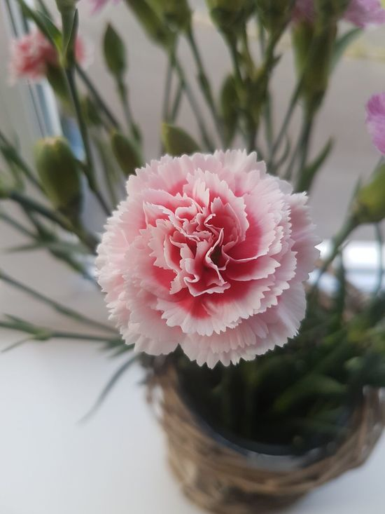 Pink Color Flower Flower Head No People Close-up Fragility Plant Window Blooming Besteyemphoto On A Journey Taking Photos Check This Out