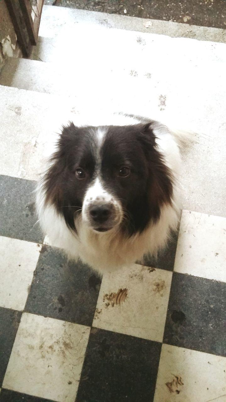 High Angle Portrait Of Dog Sitting On Tiled Floor