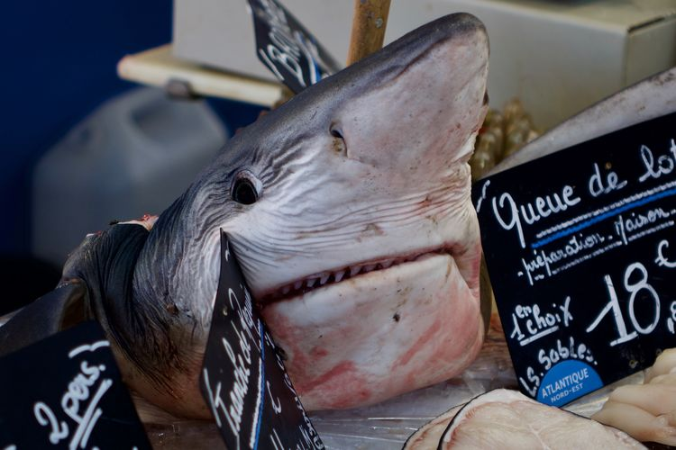 a very brave beast which fought fishermen (no)friends Close-up Food And Drink For Sale Funky Shark Market Raw Food Seafood Smiling Sharky They Eat Shark!