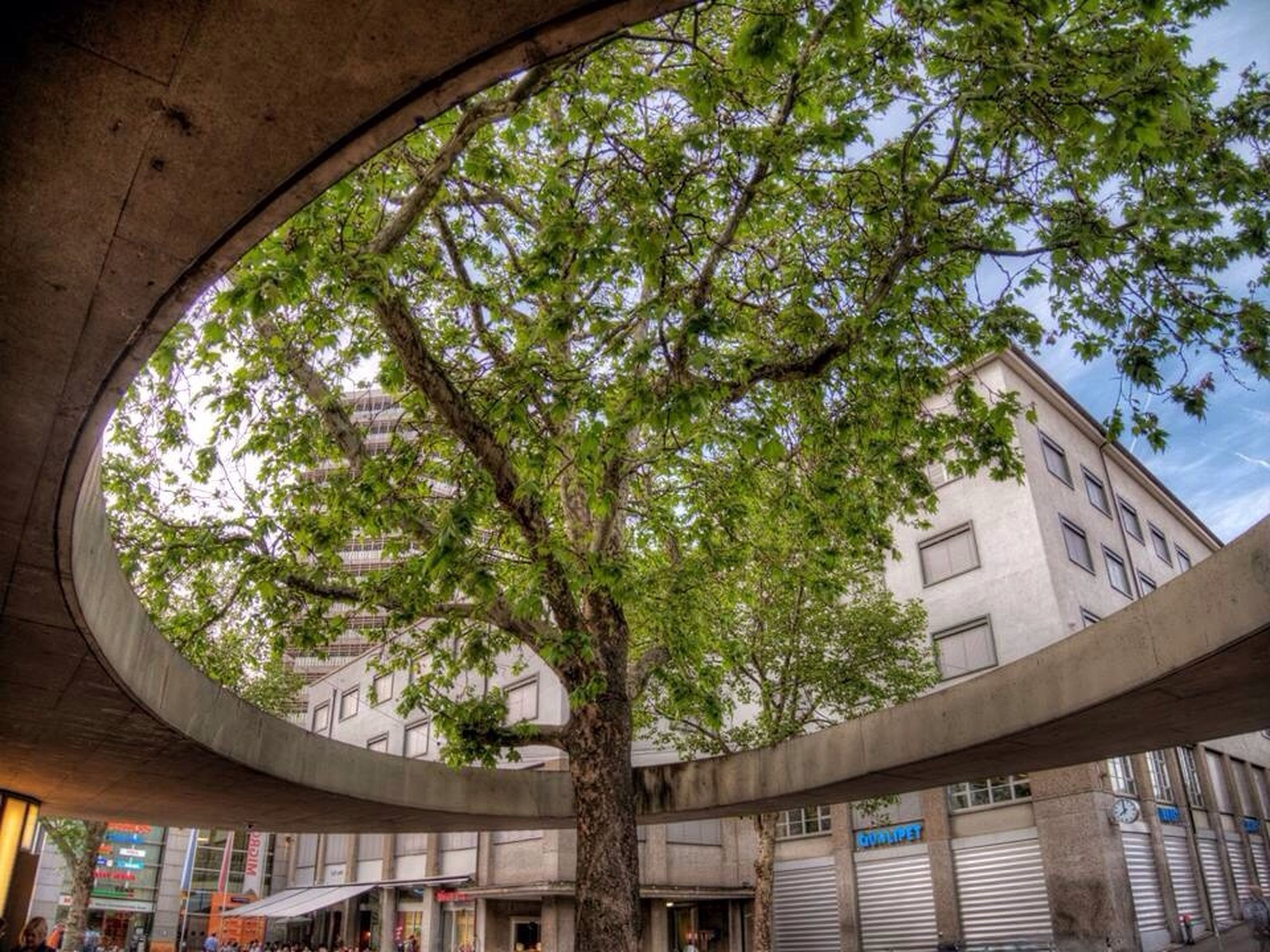 architecture, built structure, tree, building exterior, low angle view, residential structure, sky, house, residential building, building, day, city, railing, balcony, no people, growth, outdoors, sunlight, branch, arch