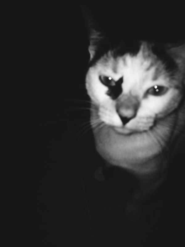 Showing Imperfection She was mad! Animal Love First Eyeem Photo Taking Photos Enjoying Life Cats Whatever Check This Out Cheese! Hi! Relaxing PhonePhotography Badpicture