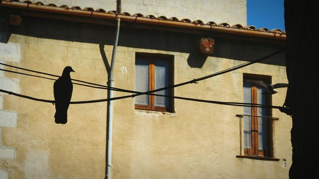 In waiting Building Exterior Low Angle View Eye4photography  CaptureTheMoment Silouette And Shadows Catalunya Girona Pigeons Outdoors Architecture Non-urban Scene Residential Structure