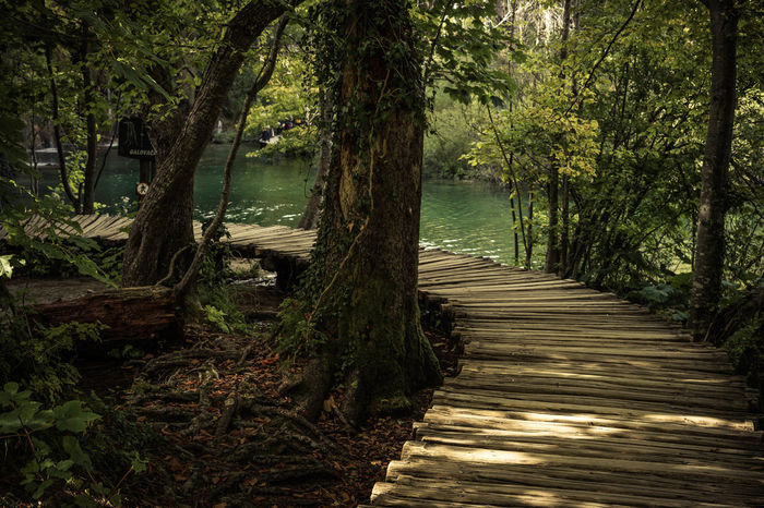 Beauty In Nature Day Forest Growth Lake Nature No People Outdoors Scenics Tranquil Scene Tree Tree Trunk Water