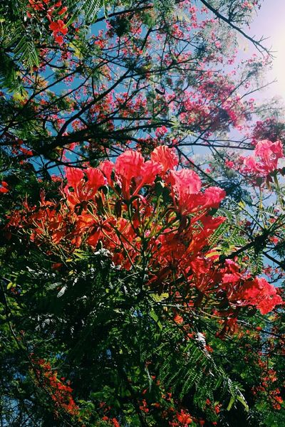 Growth Sky Nature Flower Beauty In Nature Branch MotherNaturesGift Tree Day Outdoors No People Low Angle View Fragility