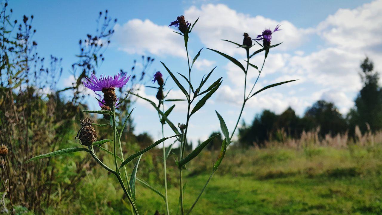 Природа цветок  поле Лес небо облака солнечныйдень осень ранняяосень Сентябрь Nature Nature_collection Flower Sky Autumn Autumn🍁🍁🍁 September 2017 September Earlyautumn