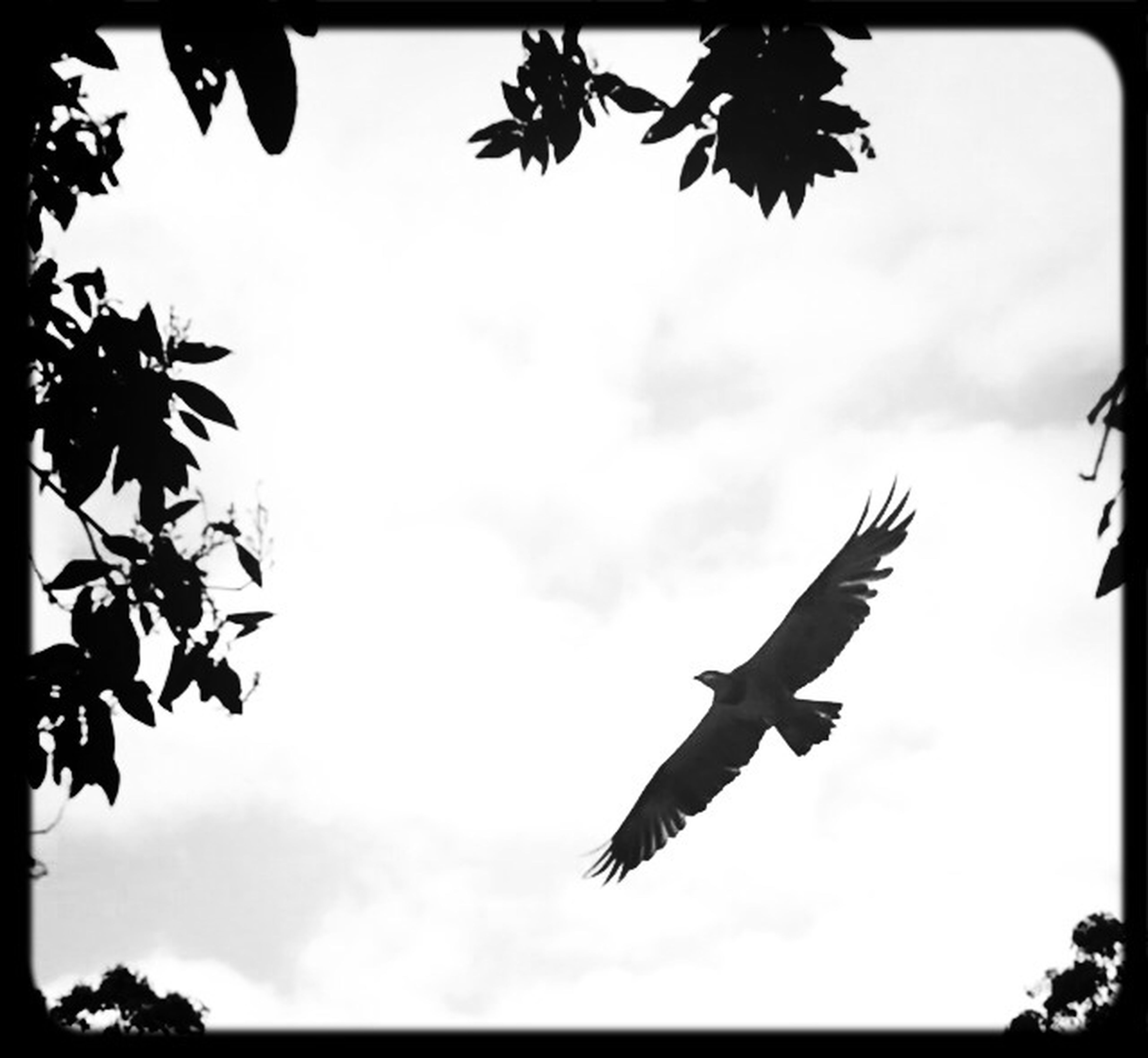 low angle view, flying, bird, sky, animals in the wild, animal themes, wildlife, spread wings, tree, mid-air, silhouette, auto post production filter, one animal, transfer print, cloud - sky, nature, cloud, branch, day, outdoors