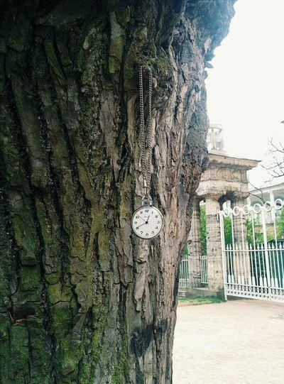 just nice Cool Nice Awesome Clock Nature Russia Green Stpetersburg Stpeters Petersburg