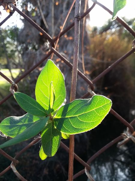 Macro Sunlight Sunshine Beautiful Plant Life Nature Leaf Plant Close-up Beauty In Nature