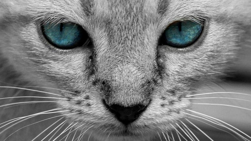 Eu E Minha Irmã Precisamos De Um Lar DPassos Abandoned Pet Beleza Abandonada 😍😌😊 Animal Photography Beautiful Girl Blue Eyes