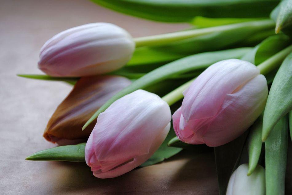 Beautiful stock photos of tulip, Flower, Focus On Foreground, Fragility, Freshness
