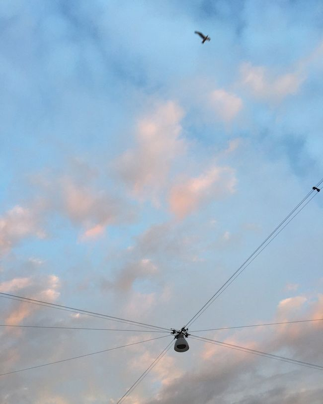 Sky No People Cable Bird Cloud - Sky Power Line  Outdoors Lamp EyeEmNewHere