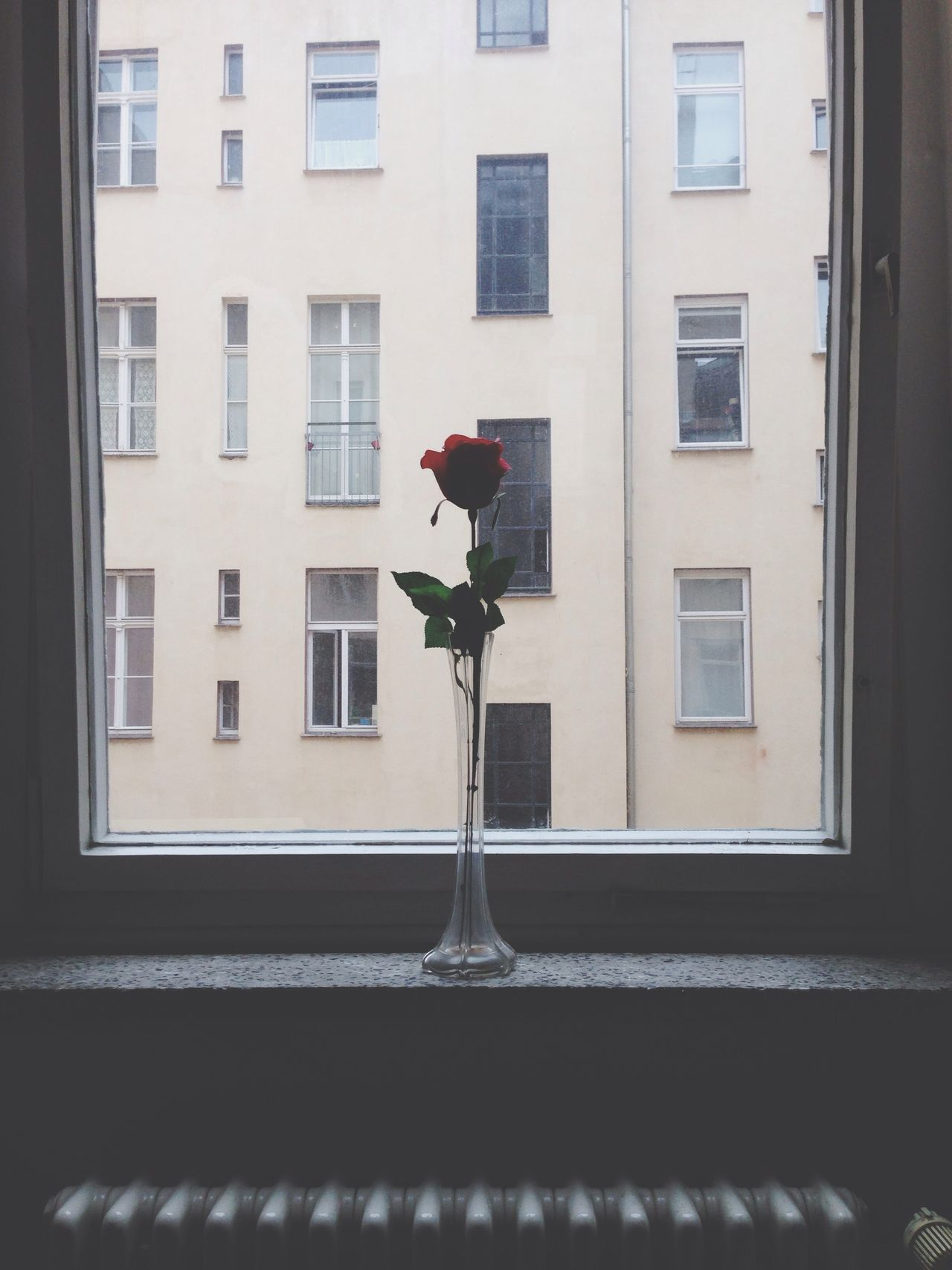 Beautiful stock photos of roses, Architecture, Backlit, Building Exterior, Day