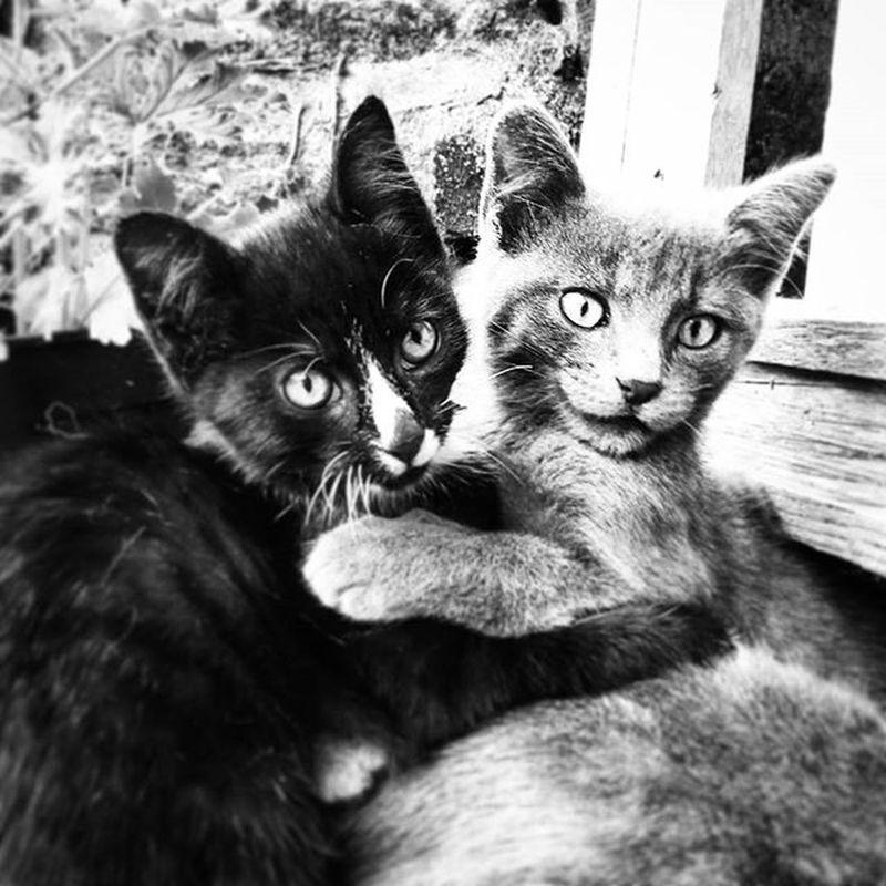So cute 🐱🐾🐱 Nikonfrance Nikonfr Unmomentsidoux Igersfrance Igersbretagne Lorient Cute Cat Animal Chat Instacat Lolcat Cutecat Pets Picsoftheday Coeurpostal Blackandwhite Black Bnw
