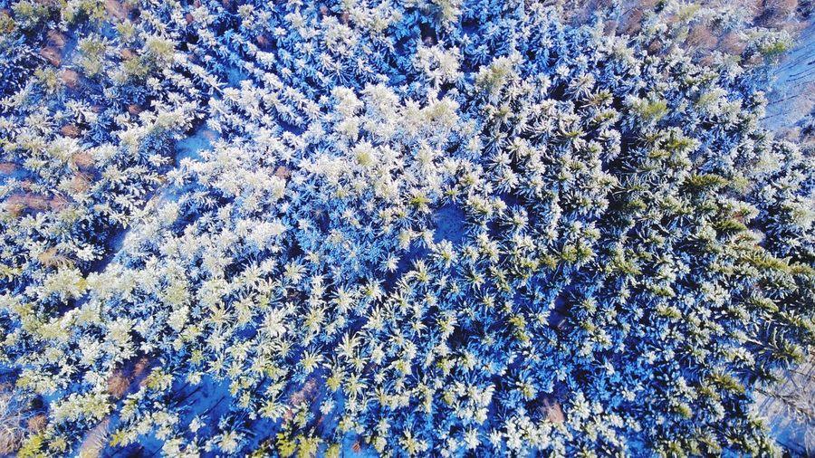 Snow Forest Dji Mavic Mavic Pro Drone  Dronephotography Droneshot Drones Aerial Shot Aerial Photography First Eyeem Photo