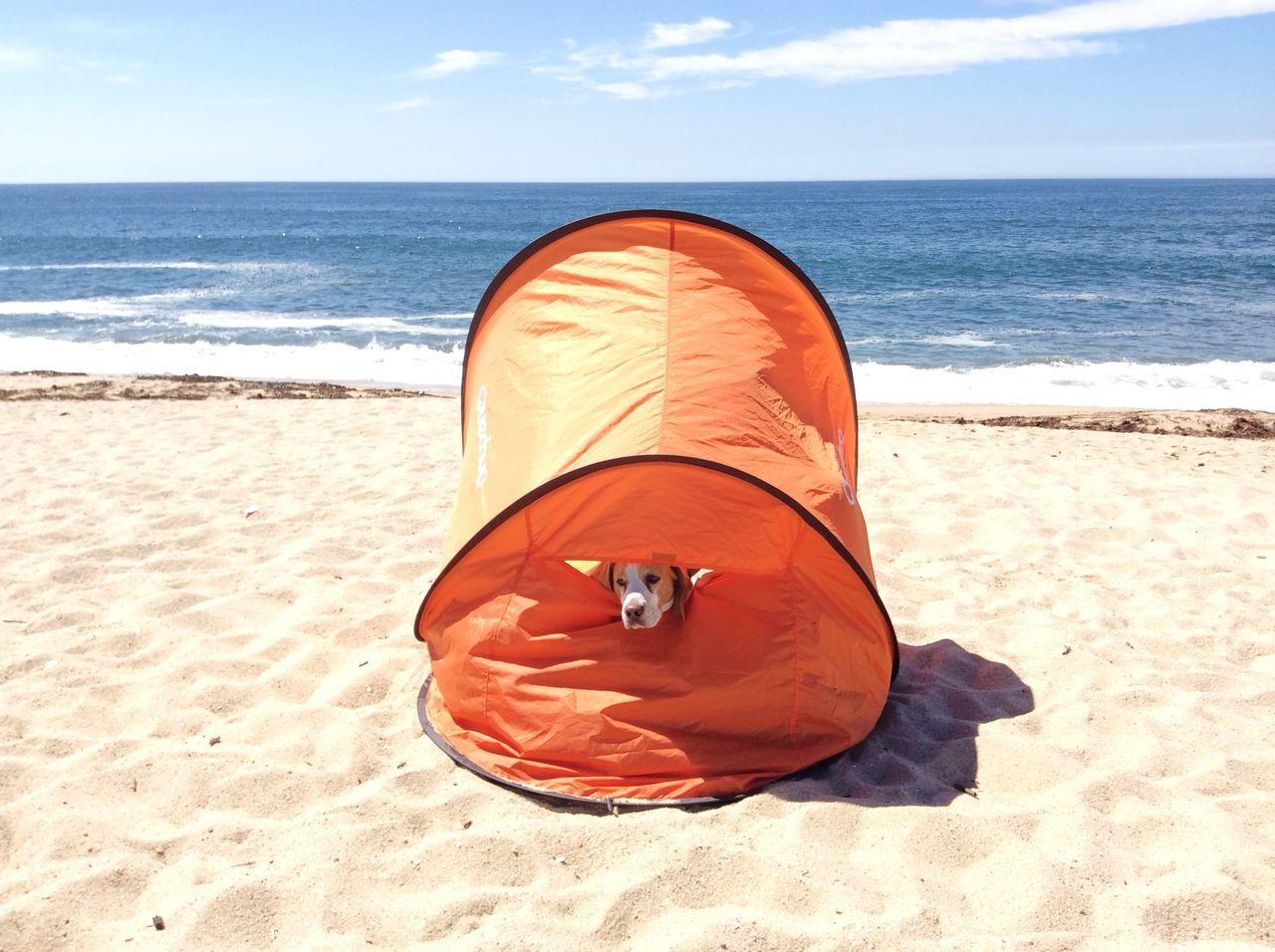 Beach Dog EyeEm Best Shots Quechua