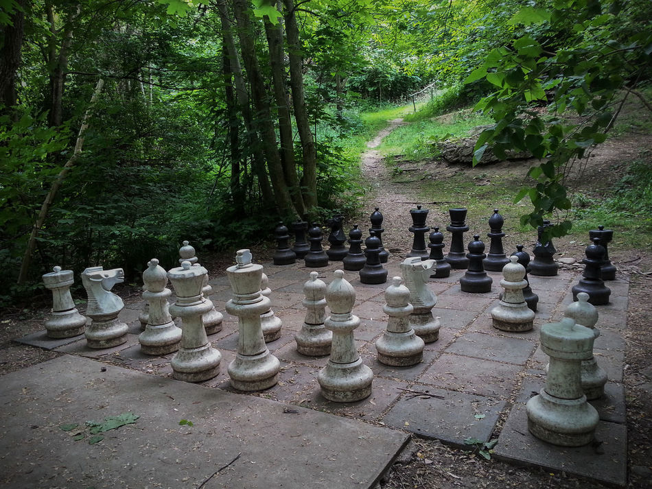 Black And White Chess Giant Chess Nature Summer Things You Find In The Woods  Wilhelminenberg Woods