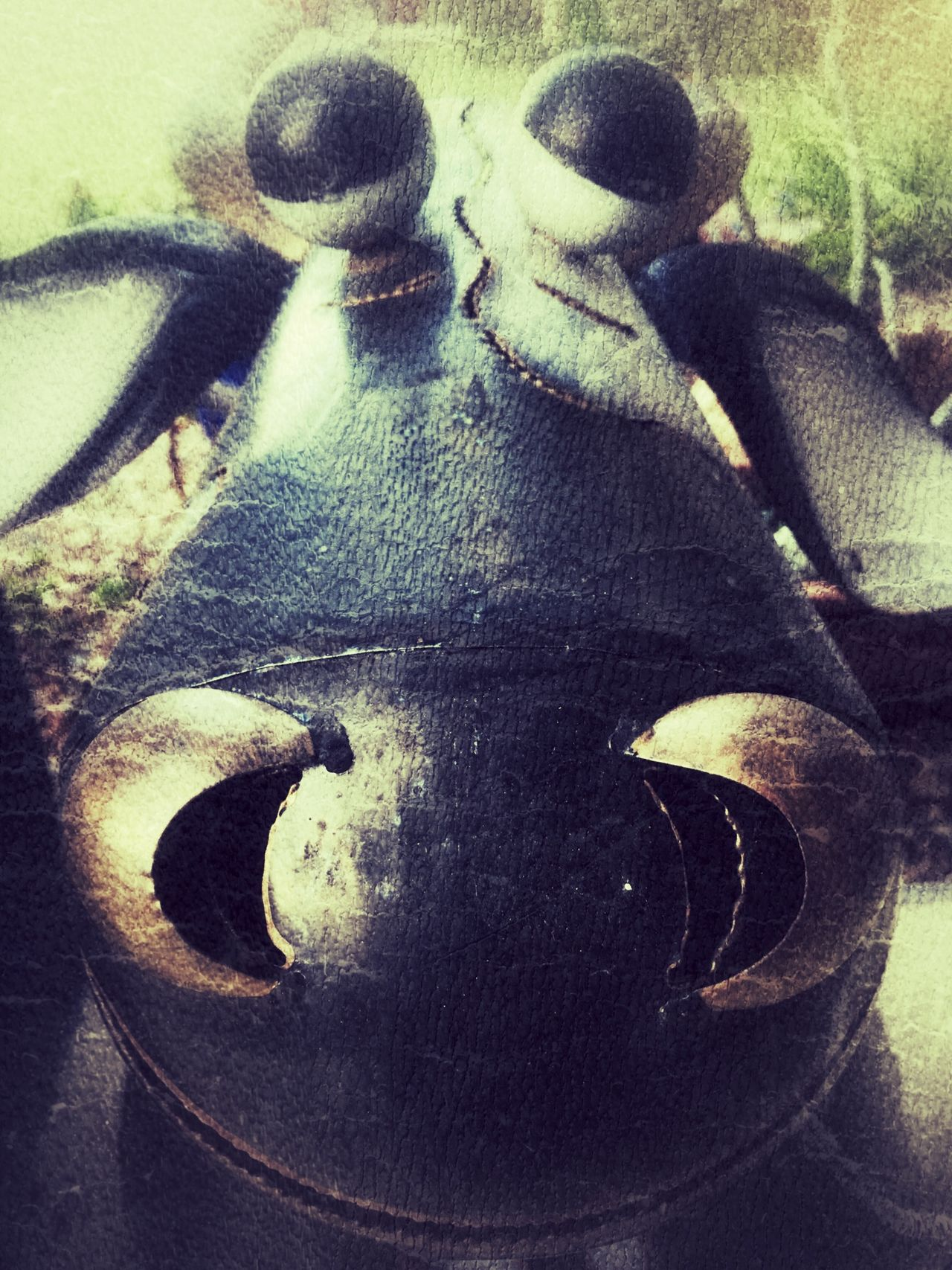 Taking Photos Check This Out Mooing Iphonephotoacademy Fooling Around