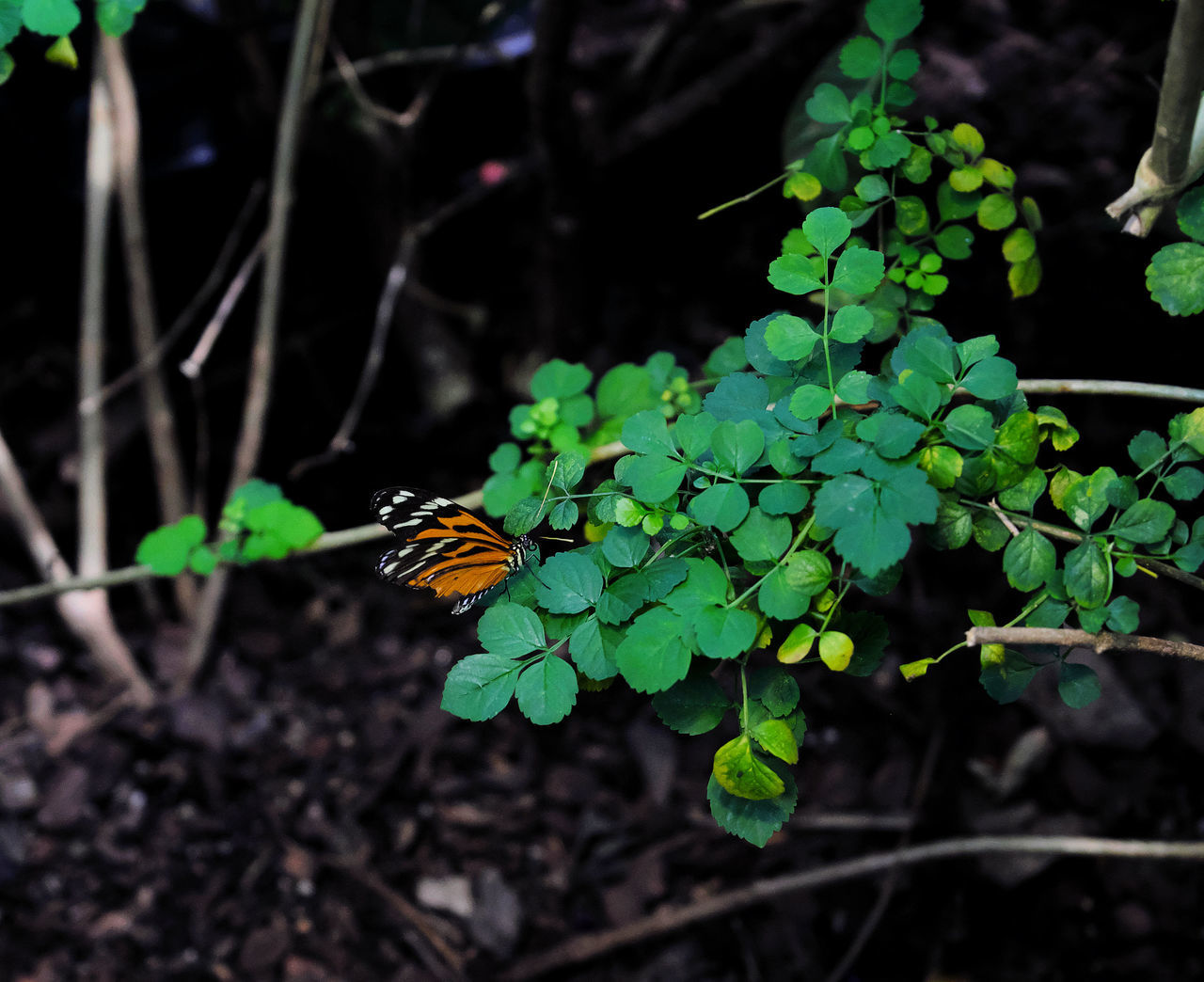 animal themes, one animal, animals in the wild, insect, growth, plant, leaf, animal wildlife, nature, butterfly - insect, outdoors, no people, focus on foreground, day, fragility, close-up, green color, beauty in nature, freshness, perching, flower head