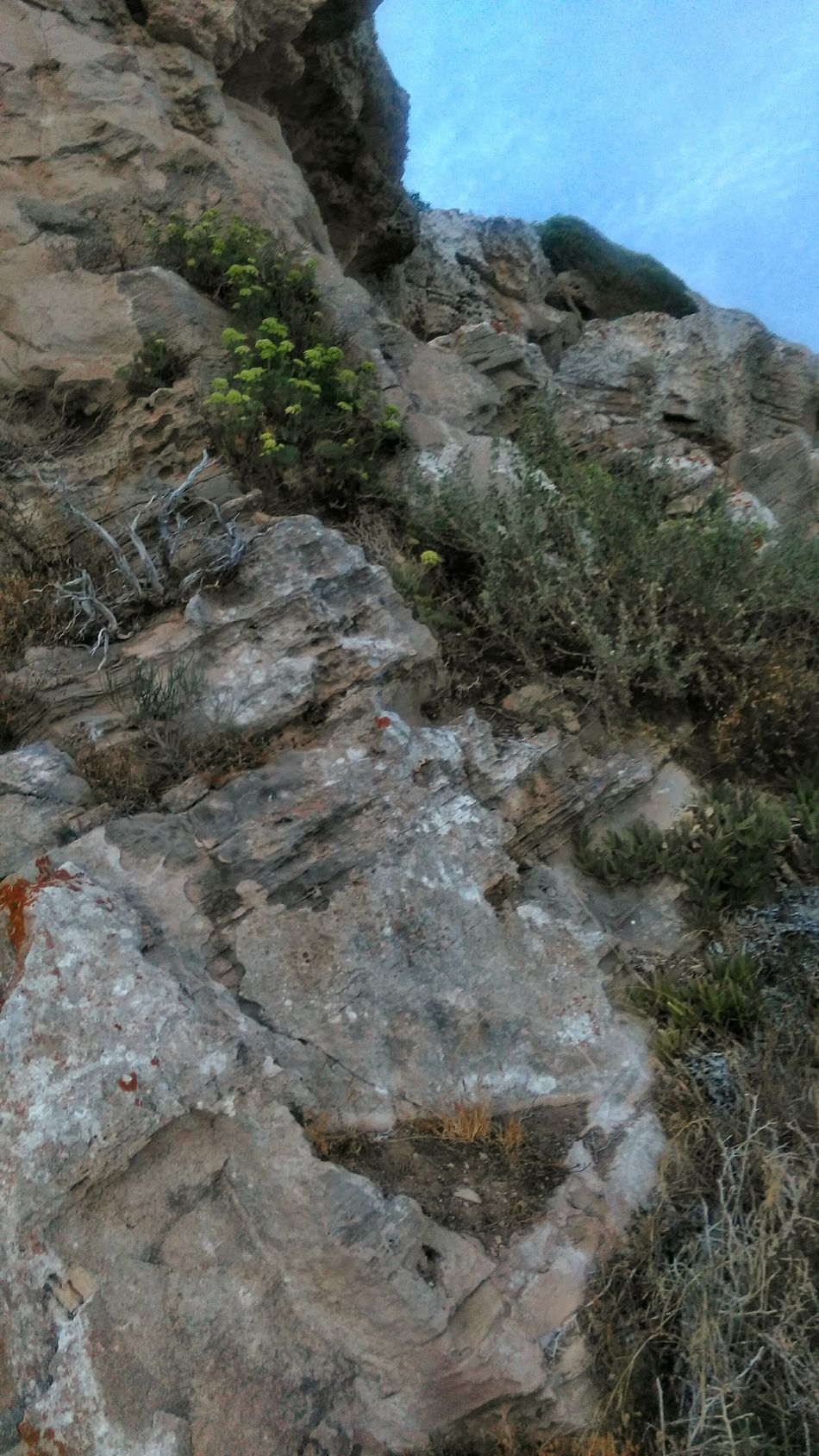 Beauty In Nature Nature No People Outdoors Travelphotography Amazingworld Seaside Rocky Coastline Mallorcaphotographer Mallorcarocks Mallorca (Spain) Coastal Beauty Coastal Rock Coastal Plants