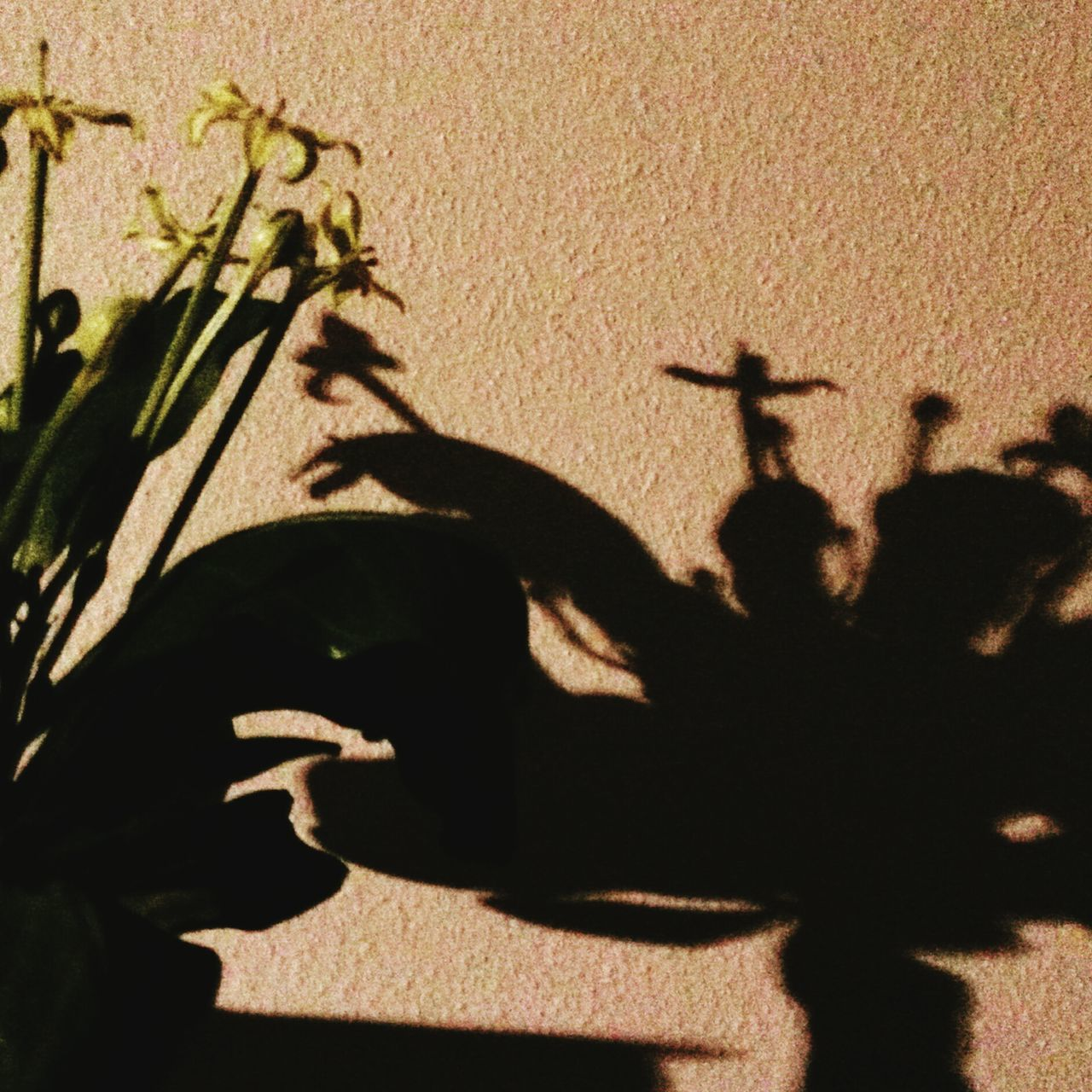 Dance In The Shadow Moment Of Silence Light And Shadow