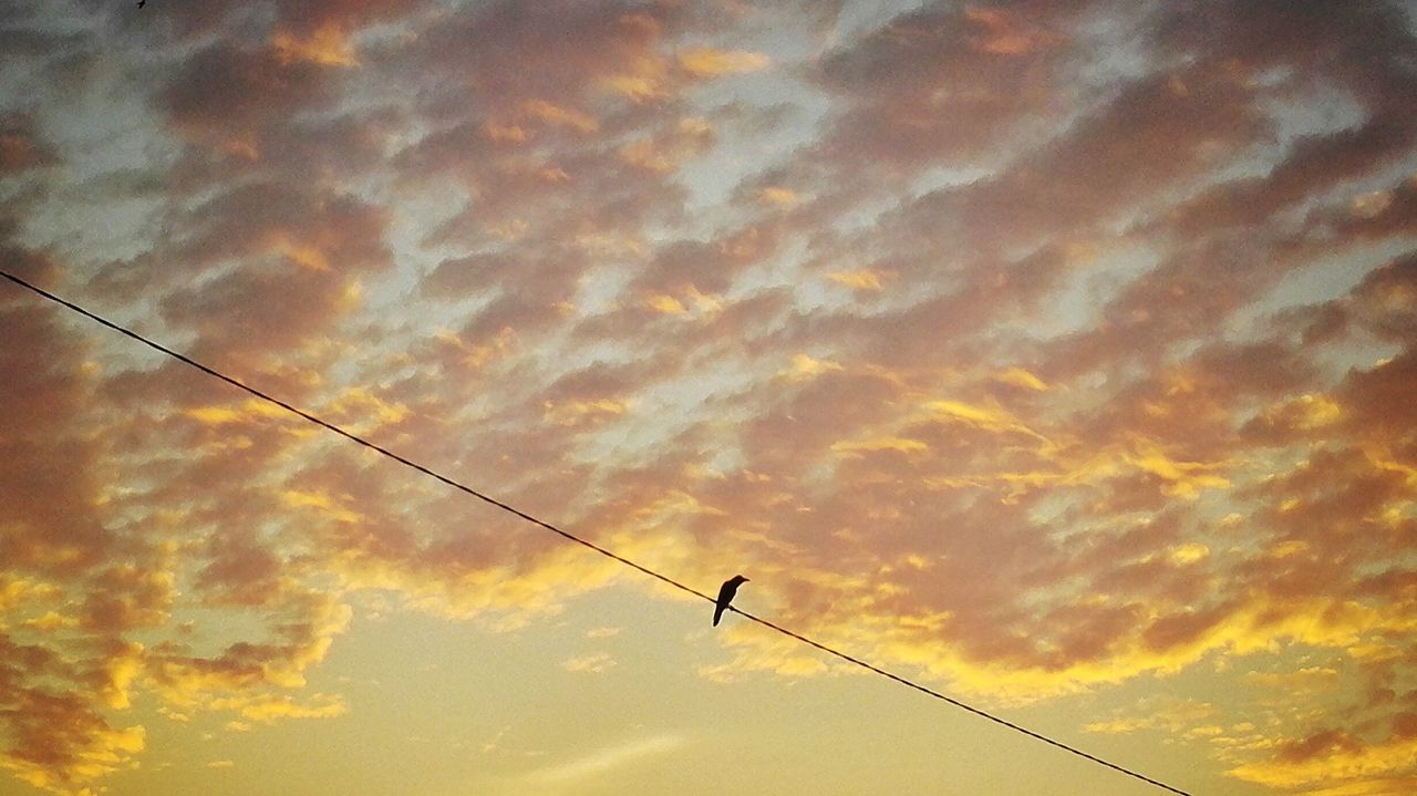 Alone... Sky Low Angle View Sunset Outdoors Cloud - Sky Silhouette Phone Photography