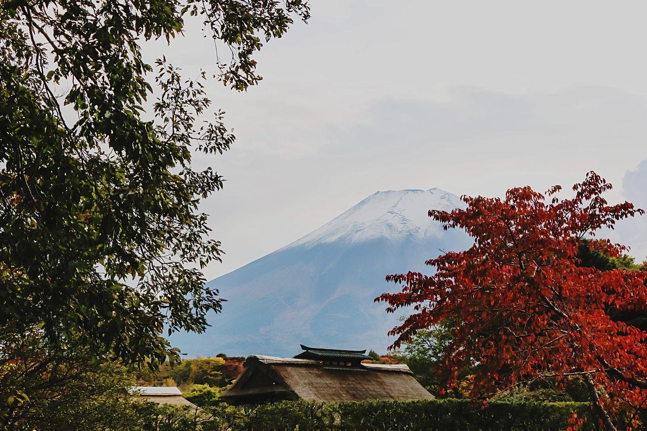 A Series Of Fuji Mountain's Picture -14 Mt.Fuji Autumn Fujimountain EyeEm Best Edits Eye Em Nature Lover Mountain View Fuji Mountain Beautiful Nature Autumn Leaves Fujiyama
