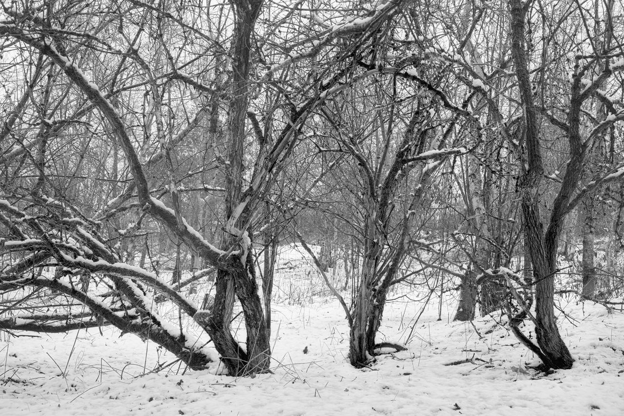 bare tree, winter, snow, nature, tree, cold temperature, tranquility, branch, outdoors, beauty in nature, day, no people, scenics, landscape, sky