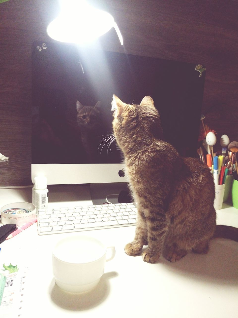 domestic cat, pets, domestic animals, animal themes, coffee cup, feline, one animal, mammal, cup, drink, table, cat, sitting, indoors, coffee - drink, food and drink, drinking, refreshment, tea - hot drink, plate, no people, illuminated, day