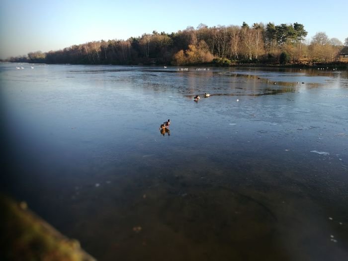 Frozen lake ice ducks cold nature