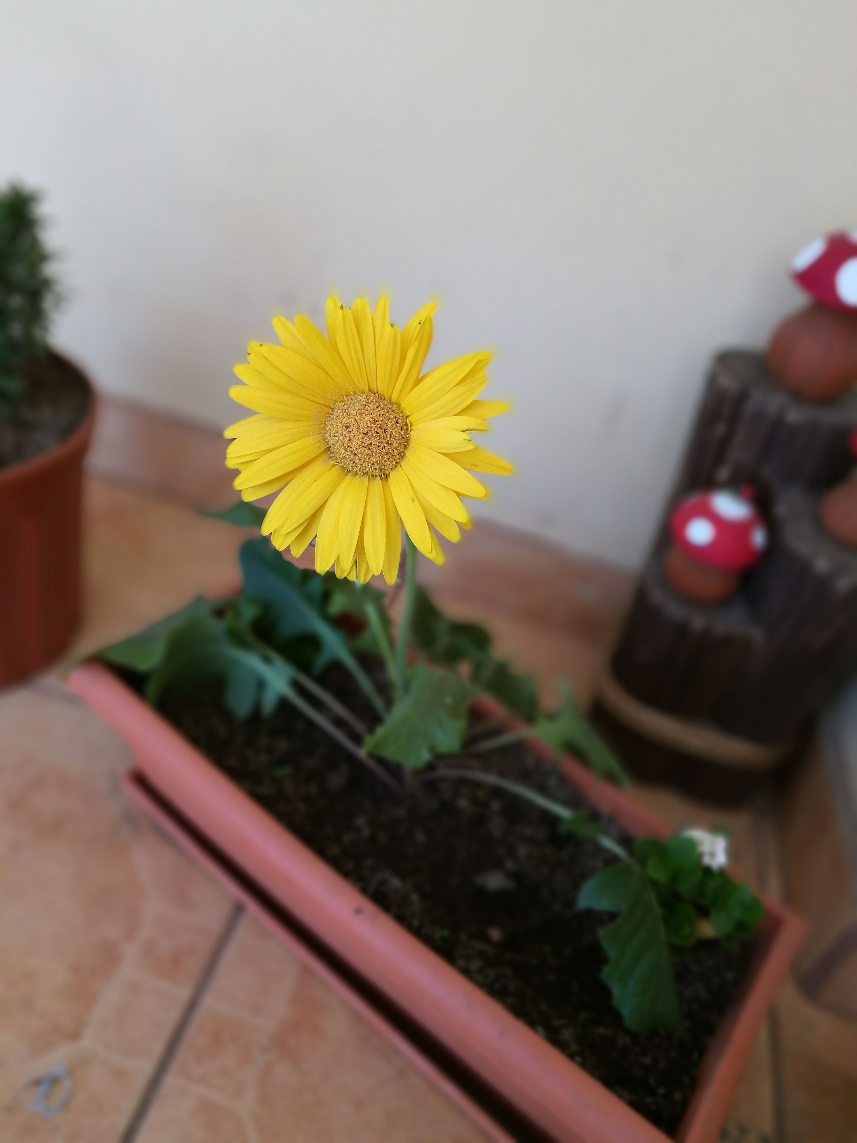 flower, plant, indoors, nature, home interior, freshness, table, fragility, yellow, no people, growth, beauty in nature, close-up, flower head, day