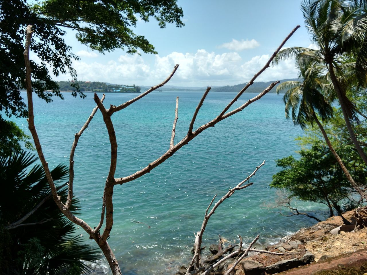 Andaman & Nicobar Islands Tree Water Nature Outdoors Day No People Growth Sky Beauty In Nature Branch Plant Close-up Tree Trunk Ocean Photography Travel Destination Tree Nature Travel Destinations Famous Places Trees And Sky Branches Of Trees Beautiful Day Blue Skyandclouds