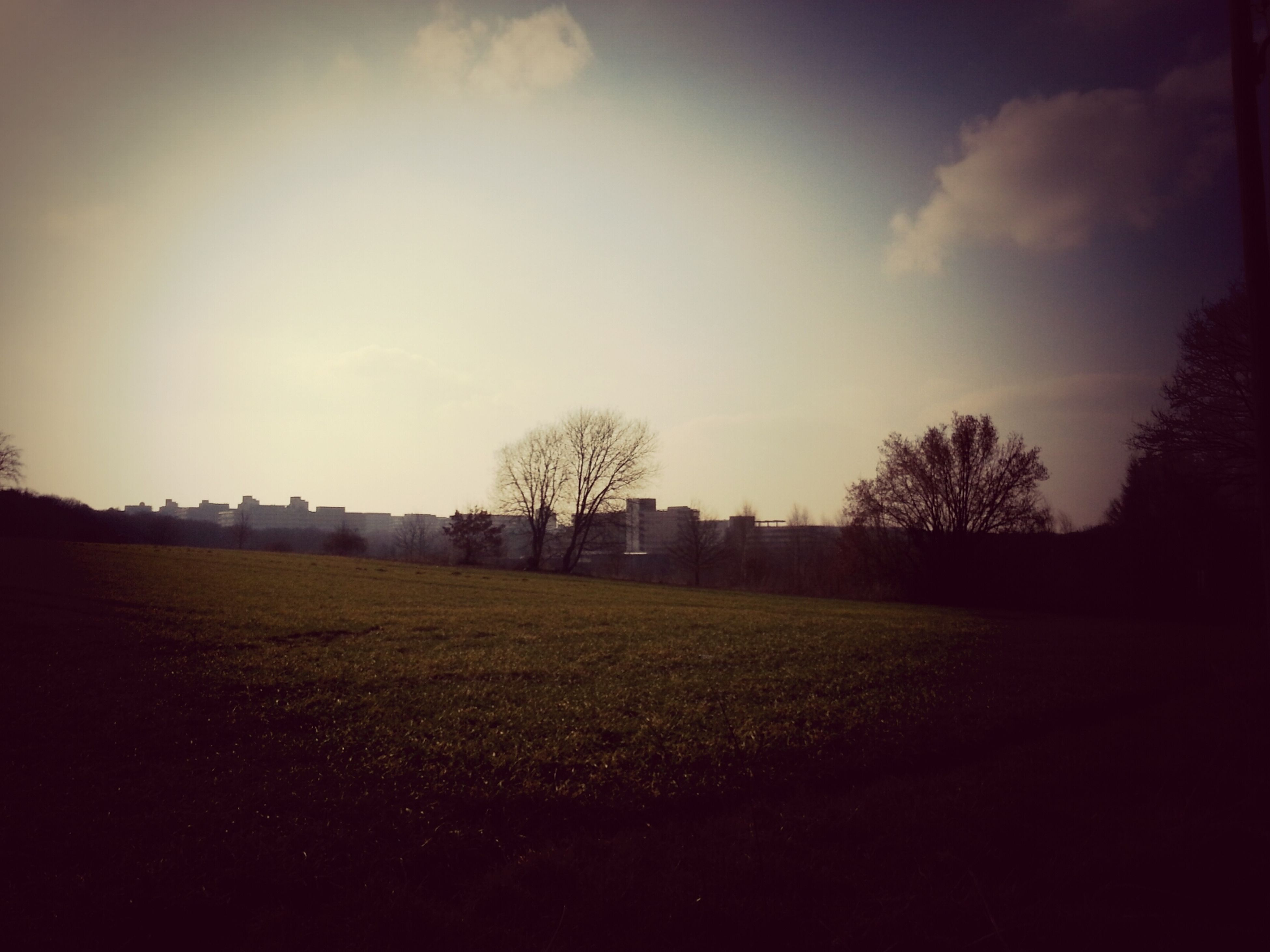 field, tree, landscape, sky, tranquility, tranquil scene, grass, beauty in nature, scenics, nature, silhouette, growth, rural scene, bare tree, sunset, grassy, cloud - sky, no people, cloud, outdoors