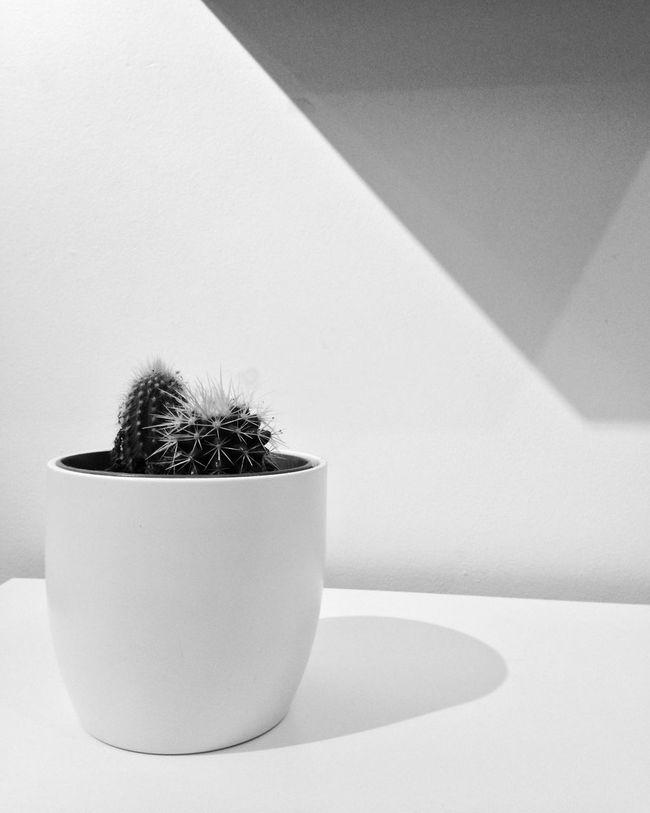 White Blackandwhite Monoart Monochrome Cactus