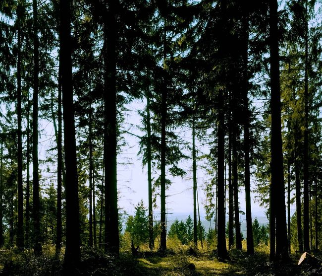Forest Beauty In Nature Outdoors Grass Day Tree Landscape Nature Wolfshagen im Harz Green Color Idyllic