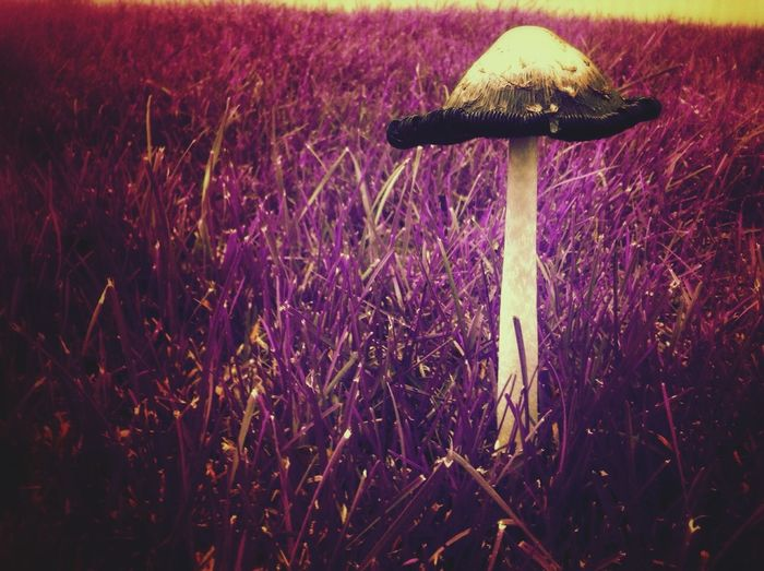 Shroomery Shades Of Lavender Ultra Color Countryside Glamour