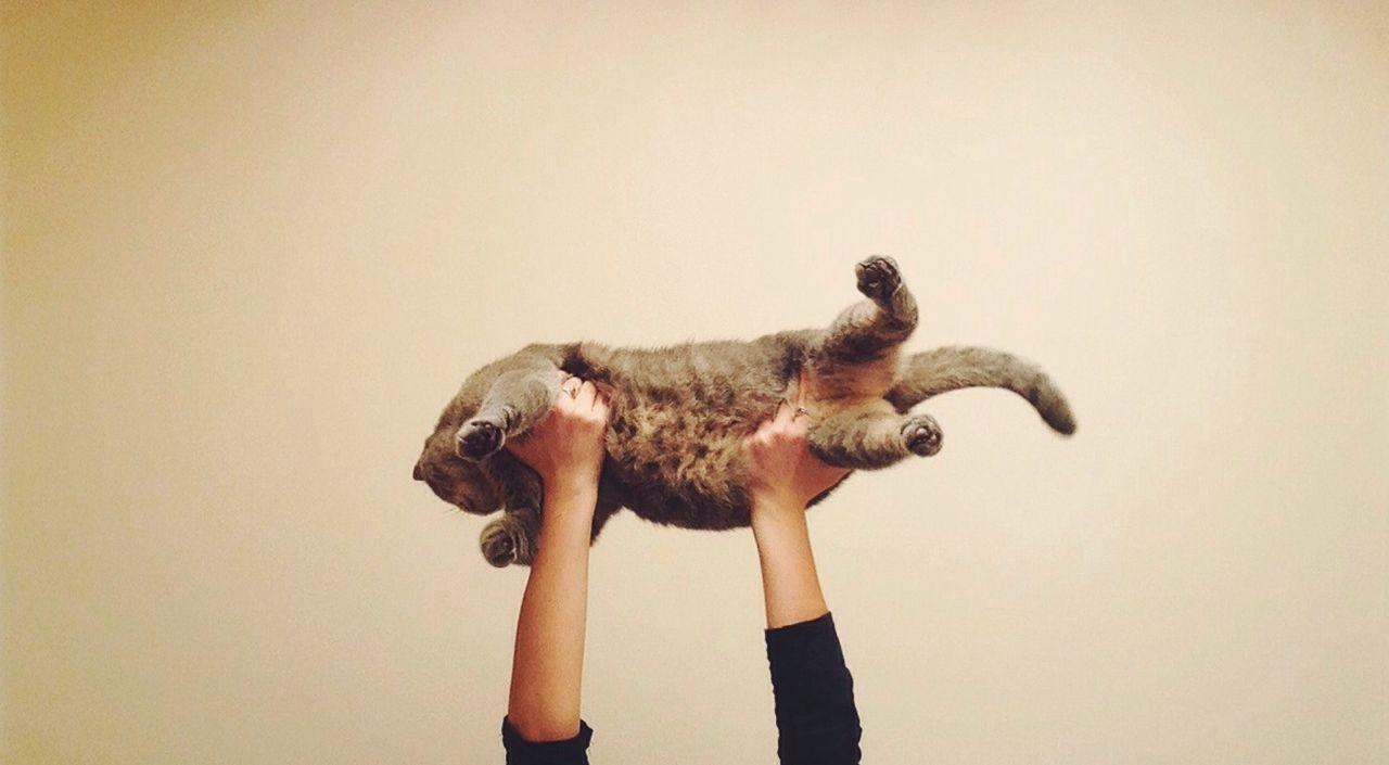 Beautiful stock photos of pets, Animal, Cat, Close Up, Domestic