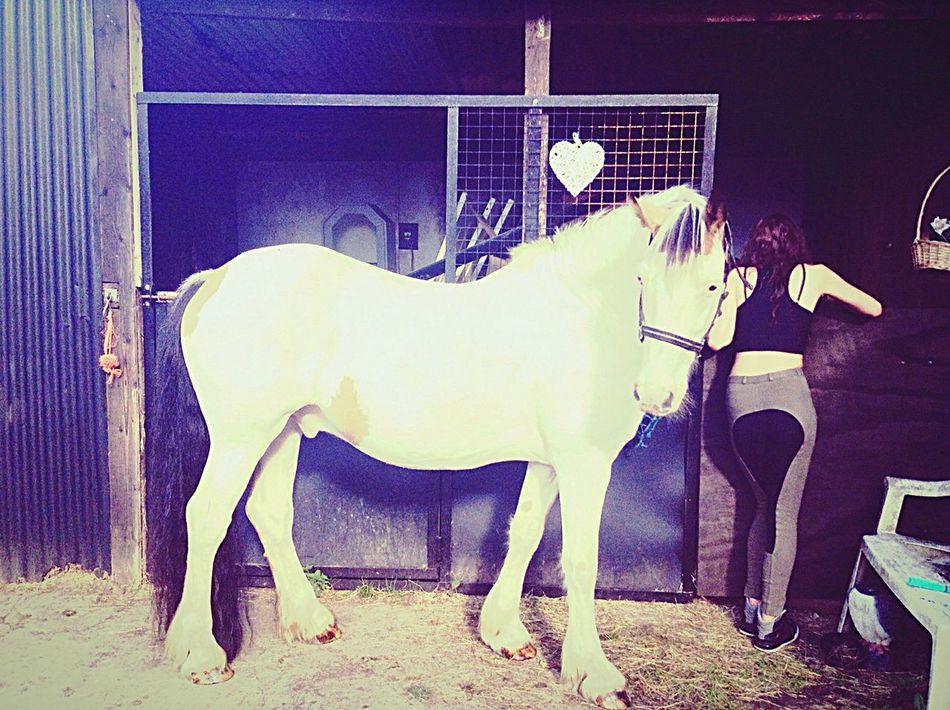 Dougal💙🐴😘@alanna🌺 BestInTheWorld☝️ Jelous🙊 Horse Riding Bestfriend❤