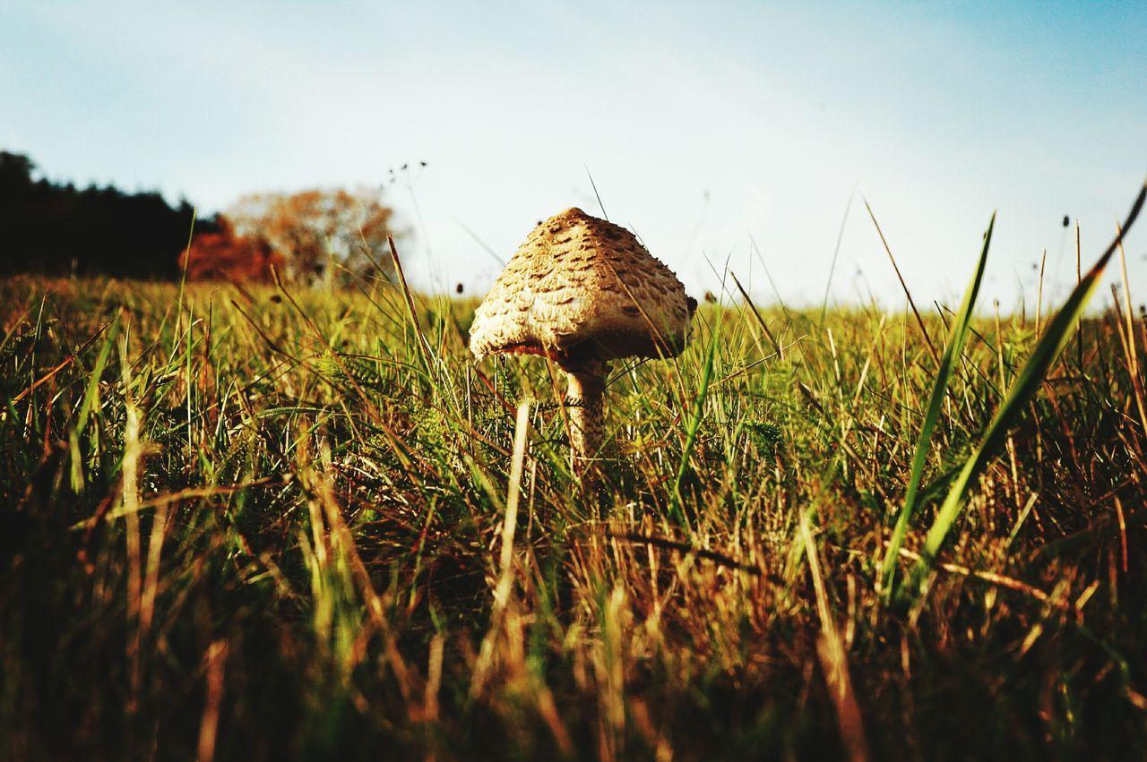Season  Idyllic Autumn Season  Beauty In Nature Woods Outdoors Beauty Country Living Nature Landscape Mushroomphotography Mushrooms Eyeem Colours Of Nature EyeEm Nature Lover Ey