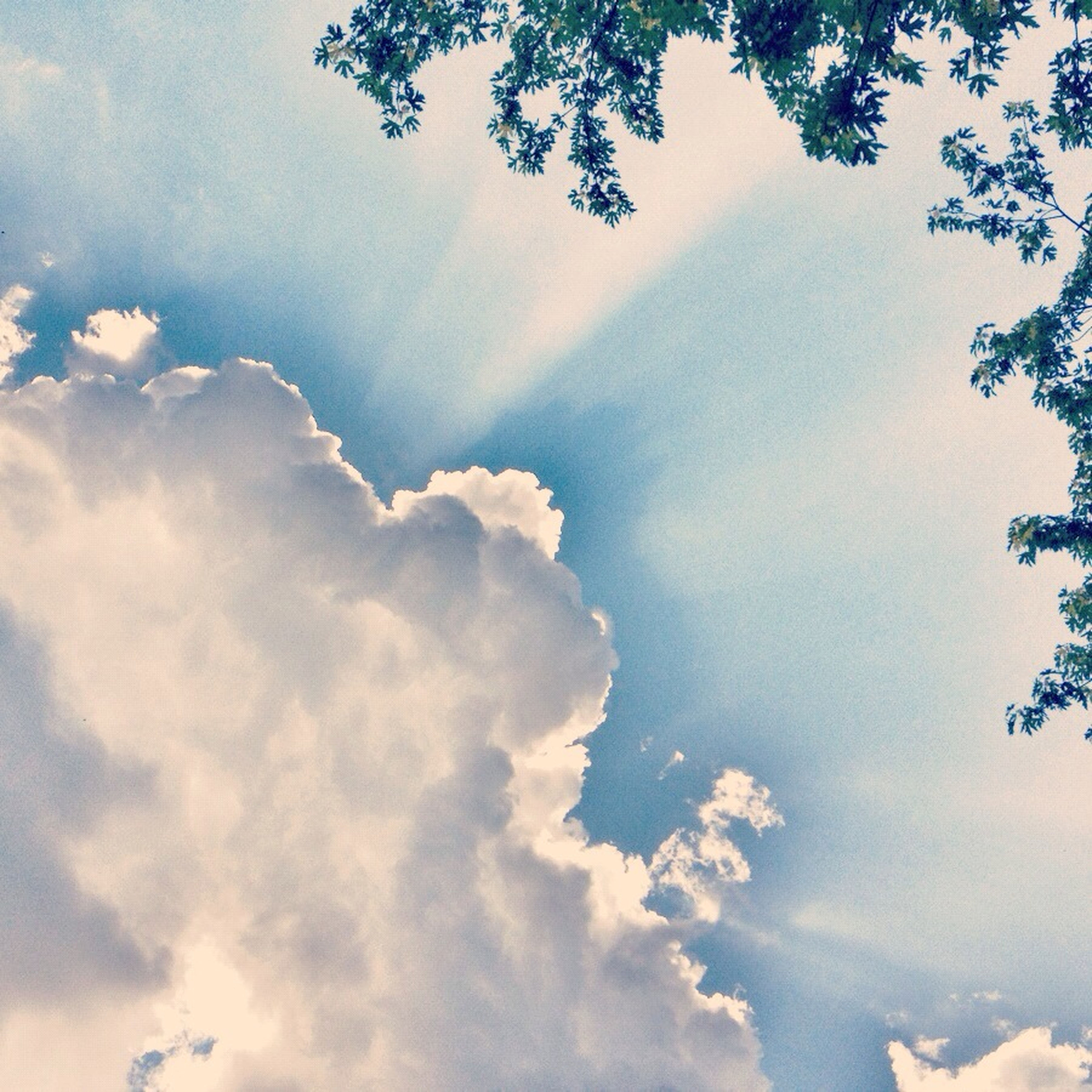 sky, low angle view, beauty in nature, cloud - sky, tranquility, scenics, nature, tranquil scene, tree, cloudy, sunbeam, sky only, sunlight, idyllic, cloud, blue, cloudscape, outdoors, backgrounds, day