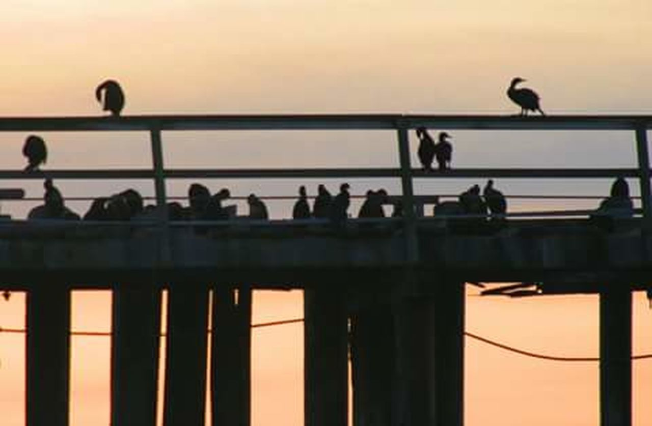 Leisure Activity Silhouette Architecture Connection Technology Indoors  Railing Perching Tourism Selective Focus Travel Destinations Convenience Engineering Modern City Life Birds Flock