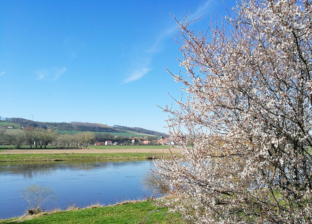 tree, beauty in nature, nature, lake, day, scenics, outdoors, tranquil scene, no people, tranquility, grass, water, branch, sky, landscape, growth, green color, springtime, blue, bare tree, mountain, flower