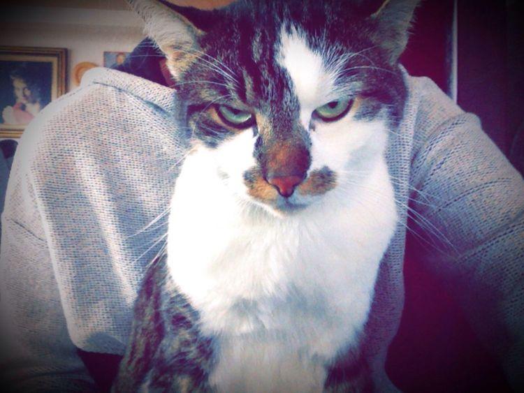 School tomorrow? Cat Love My Cat Germany