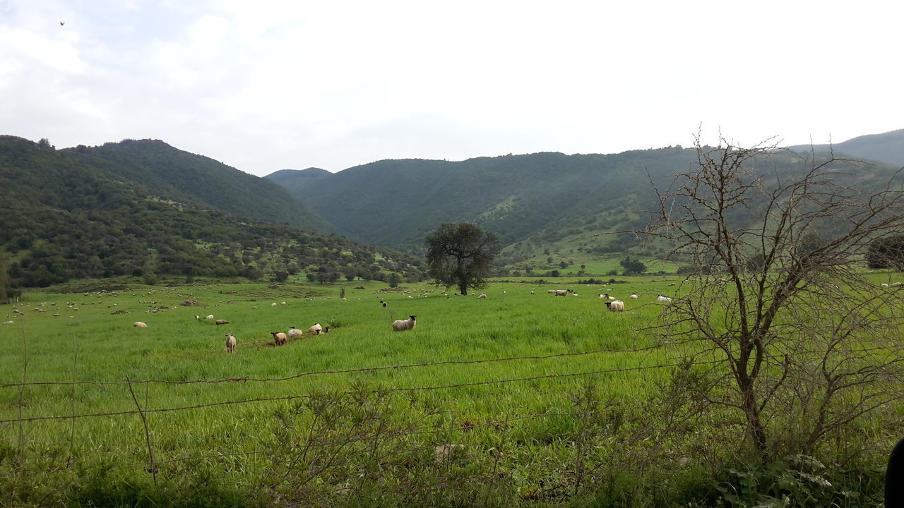 Valle De Lolol Sector De Nerquihue, Chile