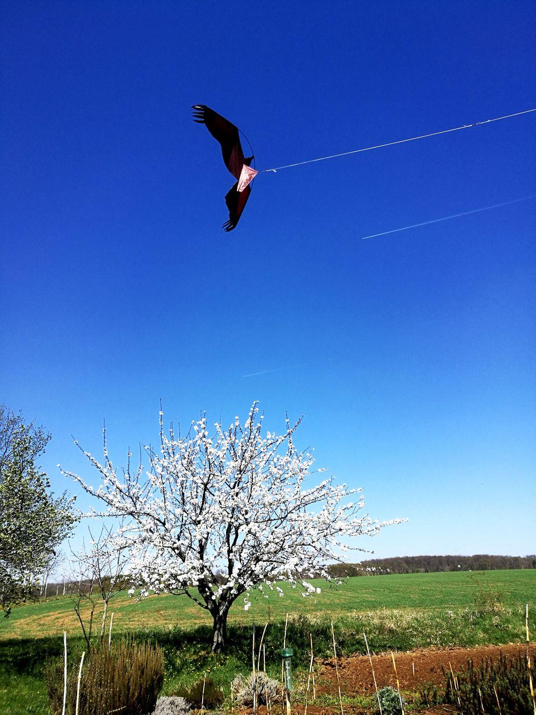 Kite Flying Clear Sky Sky No People Tree Birdscarrer Zero Wind Kite EyeEmNewHere EyeEm New Here