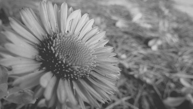 Close Up Nature Nature_collection Blackandwhite Photography Black & White Flower Flower Collection Loverofnature