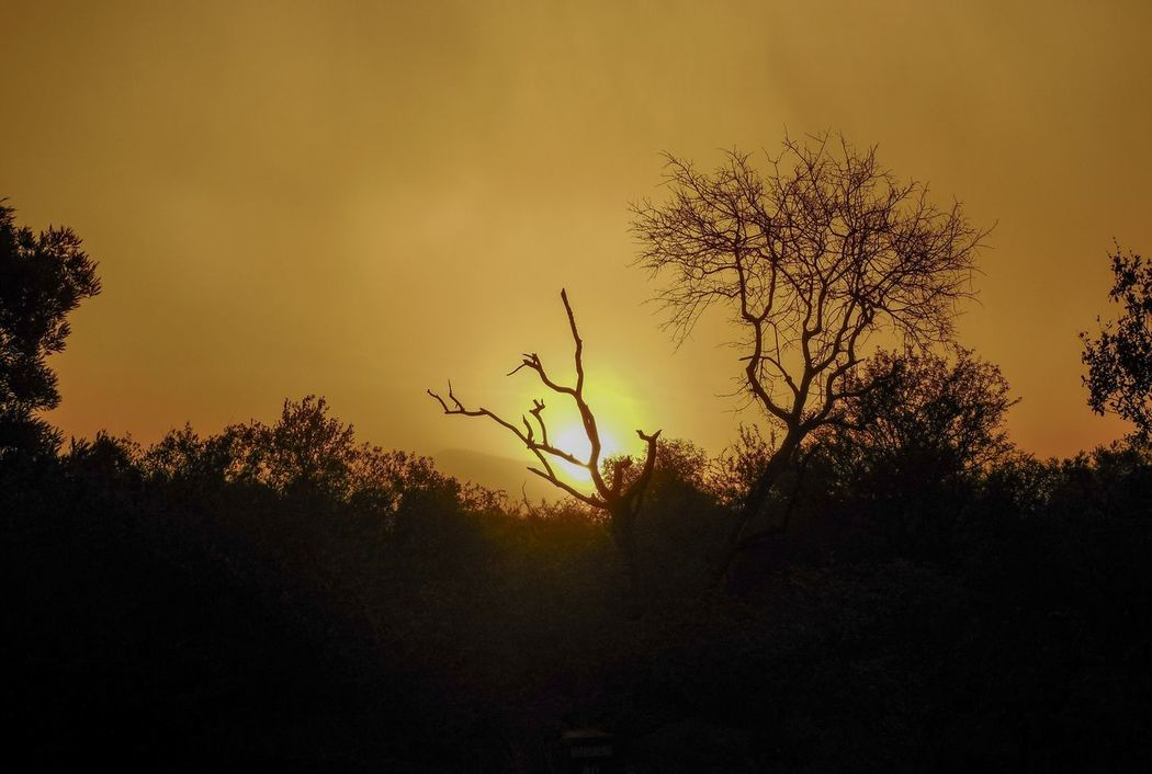 Sunset Botswana Gaborone Dust Storm Tree Sillouette Summer Game Drive Landscape Golden Africa Tranquility Rural Scene